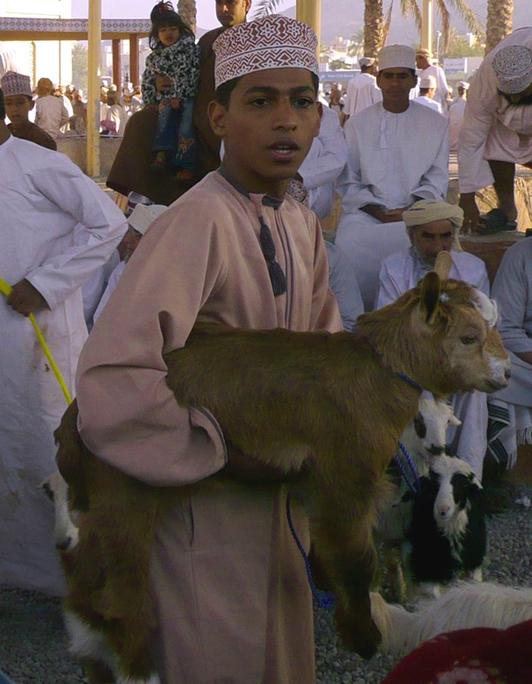 Oman Tiermarkt Nizwa 2