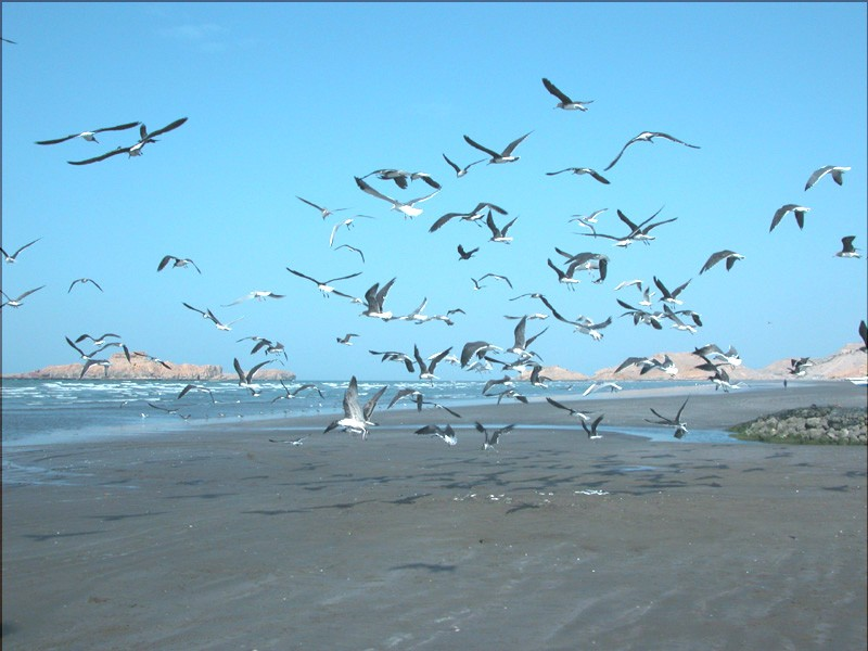 "Vogelparadies ""Barr al-Hikman"""