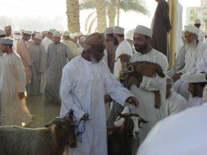Oman - der Bahla Viehmarkt: Ziegen werden den zahlreichen Käufern vorgeführt.