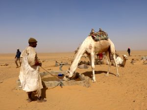 Sudan: Kamele