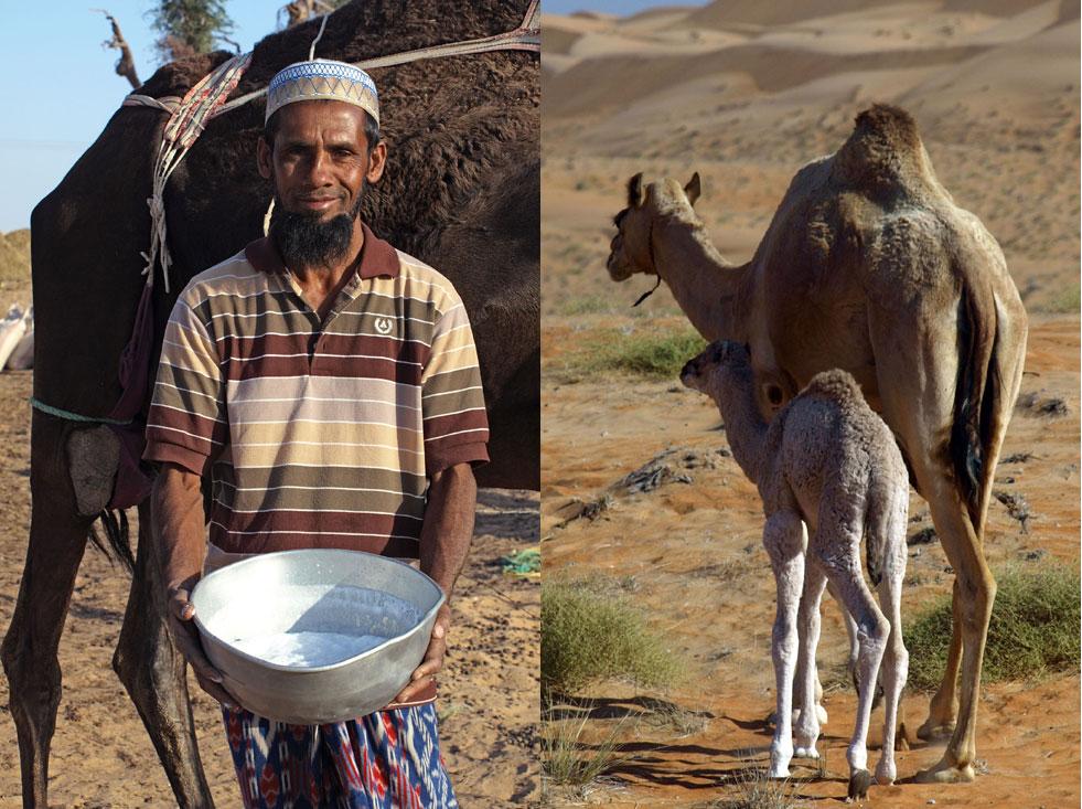 Oman Rub al-Khali Kamelhirte
