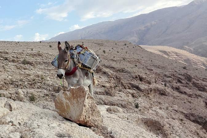 Oman: Trekking mit Eseln in der Sharqiyah