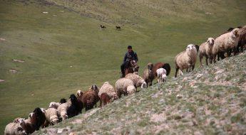 Videobotschaft aus Kirgistan