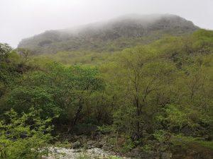 Nebelwälder in Salalah