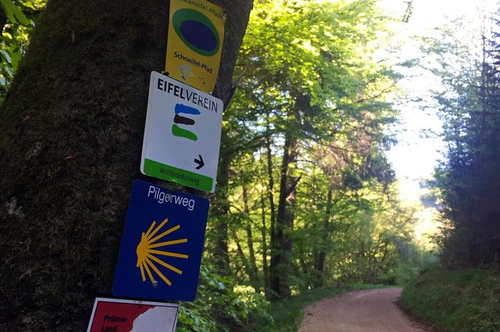 Lama-Trekking Eifel Wanderwege