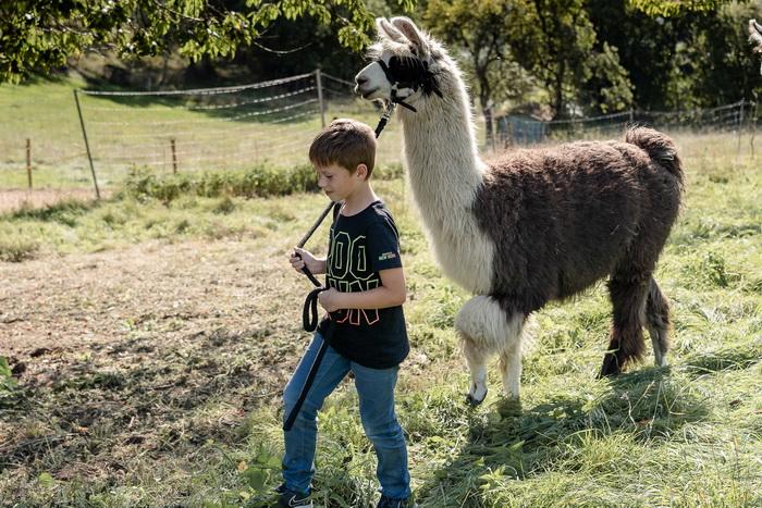 Lama-Trekking Eifel mit Kindern